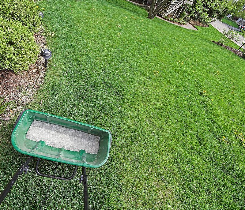 Lawn Fertilization Edmond | Imperial Lawns
