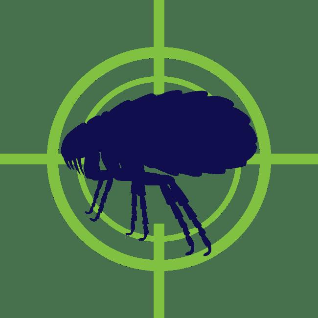 Flea Tick Control in Edmond