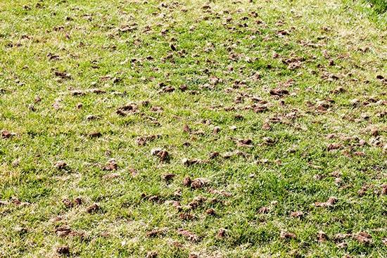 Lawn Aerating Edmond Oklahoma
